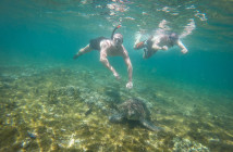 Siquijor GOPR8915 214x140 - Apo Island - turtles
