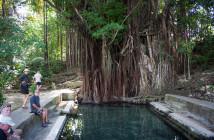 Siquijor IMG 3163 214x140 - Century Old Balete Tree - Fish spa
