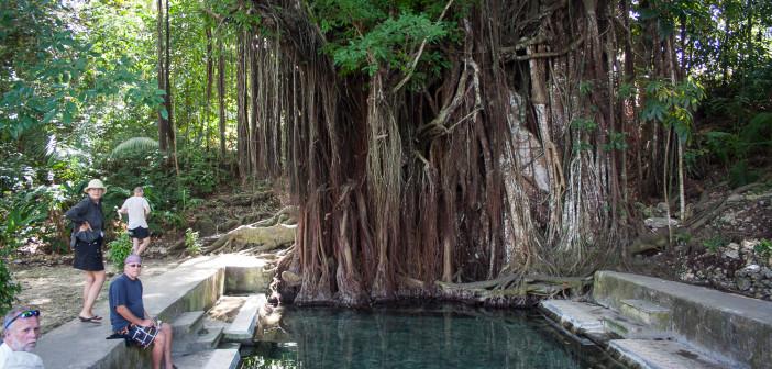 Siquijor IMG 3163 702x336 - Century Old Balete Tree - Fish spa