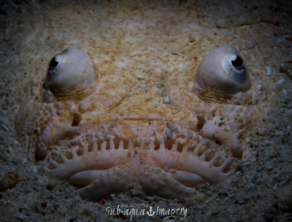 Siquijor 20150410 P4100450 1024x779 - Underwater world on siquijor