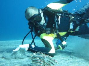 Siquijor IMG 2447 300x225 - Apo - Diver