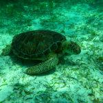 Siquijor IMG 5250 150x150 - Apo - Diver