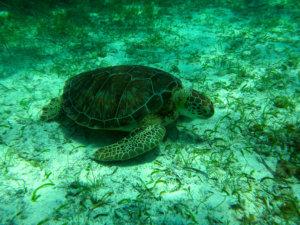 Siquijor IMG 5250 300x225 - Apo - Diver