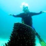 Siquijor IMG 5968 150x150 - Apo - Diver