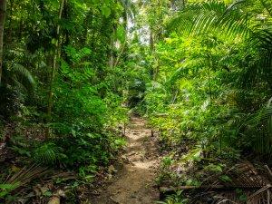 Siquijor IMG 20170717 124932 300x225 - Cabugsayan Falls