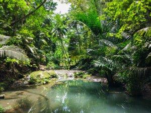 Siquijor IMG 20170717 125725 300x225 - Cabugsayan Falls