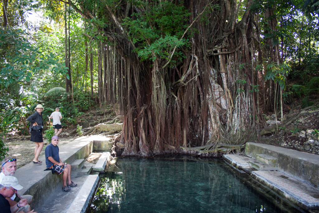 Siquijor IMG 3163 1024x683 - Century Old Balete Tree - Fish spa